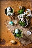 Bunte Wachteleier mit Moos und Kirschblüten in Blumentöpfen als Osterdekoration