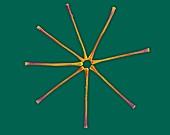 pennate diatom colony (Asterionella sp.), SEM
