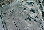 Early bird footprints