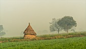 Hay stack in a field, India