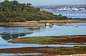 Brownsea Island, UK