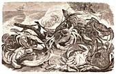 Crabs on the seashore