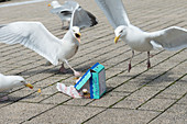 Seagulls squabbling over leftovers