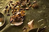 Beech seeds (Fagus sylvatica) on brass spoons