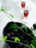 Blackberry liqueur and blackberry branches