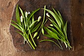 Fresh wild garlic flowers with buds