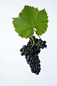 Diolinoir grapes with a vine leaf