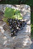 The Bondola grape with a vine leaf on a wooden table