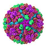 Chikungunya virus, illustration