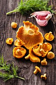 Raw wild mushrooms chanterelles with dill and garlic on wooden texture background