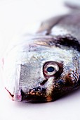 Head of a fresh sea bream (close-up)