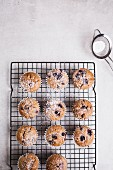 Blueberry muffins on baking tray sprinkled with icing sugar