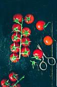 Cherry Tomatoes on the Vine, Dark Background