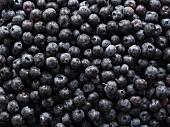Viele Blaubeeren (bildfüllend)