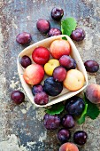 A variety of different plums, some in a wooden punnet on a distressed background