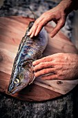 Online fish supplier: pikeperch being checked