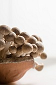 Pilze in Keramikschale (Nahaufnahme)