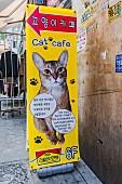 Werbung für 'Cat Cafe', Myeong-dong, Seoul, Südkorea