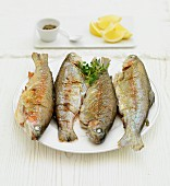 Grilled rainbow trouts