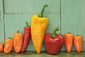 Reihe von roten, gelben und orangefarbenen Paprika vor grüner Holzwand