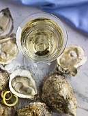 Austern und ein Glas Chenin Blanc (Aufsicht)