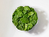 Fresh baby spinach in a plastic bowl in front of a white background (seen from above)