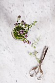 Fresh flowering summer savory in a glass jar (top view)