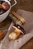 A fresh porcini mushroom with a brush