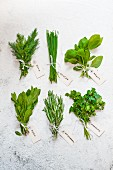 Various herbs with tags