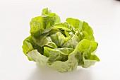 Kopfsalat
