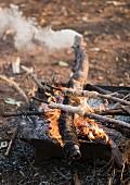 Dinkel-Stockbrot mit Honig und Tahin über Feuer backen