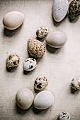 Different egg varieties