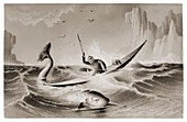 Inuit hunting a narwhal in a kayak.