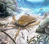 Eurypterid catching its prey, illustration