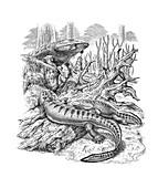 Acanthostega and Ichthyostega tetrapods, illustration