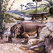 Lystrosaurus therapsids, illustration