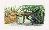 Lagosuchus talampayensis reptile, illustration