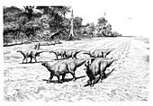 Iguanadon dinosaur trackway, illustration