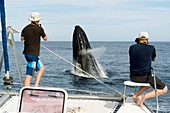 Photographing a breaching humpback whale