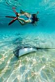 Snorkeller with stingrays