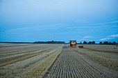 Wheat harvesting at dusk