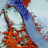 Petermann Glacier, satellite image