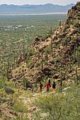 Hikers amongst cacti in desert terrain, USA