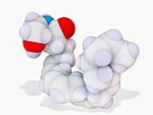 Anandamide neurotransmitter, molecular model