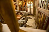 Dinosaurs at the Ark Encounter creationist theme park
