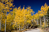 Autumn colours and road, Rocky Mountains, USA