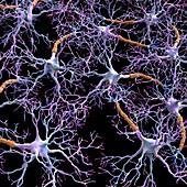 Neural network, computer artwork
