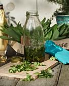 Homemade wild garlic oil in a bottle