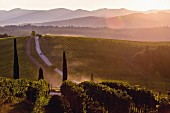 A wine landscape in Tuscany, Italy
