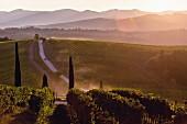 Weinlandschaft, Toskana, Italien